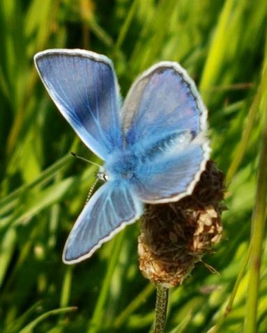 Picture for Facebook Blue Butterfly